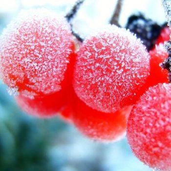 Frutas e Legumes Congelados Diminuem os Seus Nutrientes?