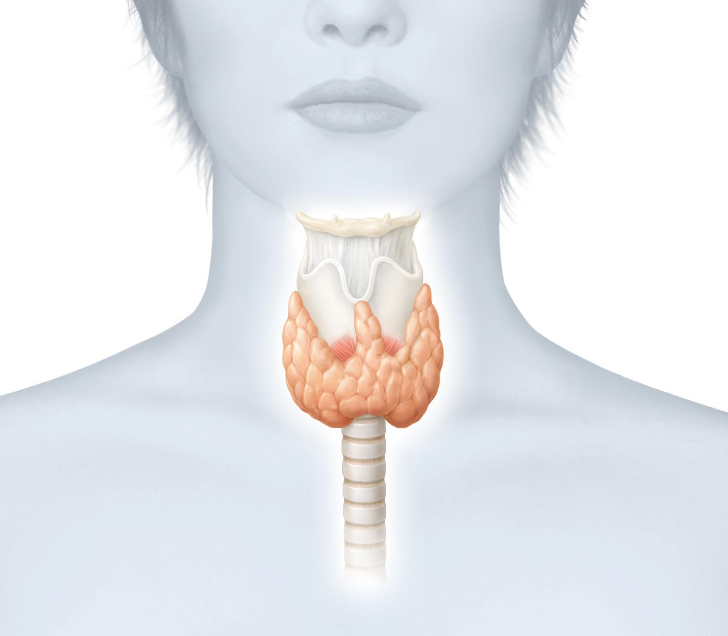 Exames de tireoide para o diagnostico correto.