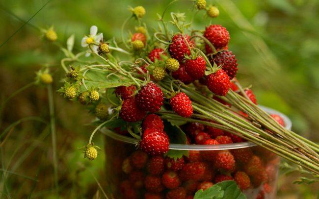 frutas-para-emagrecer-dr-juliano-pimentel-2