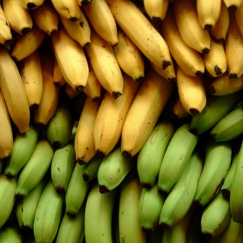 Dieta da Banana. Imagem: (Divulgação)