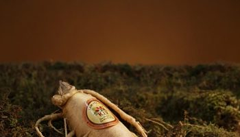 Ginseng Indiano. Imagem: (Divulgação)