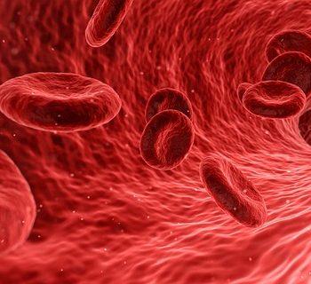 O Colesterol e a Saúde. Imagem: (Divulgação)
