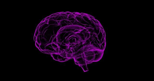 Curiosidades sobre o cérebro.