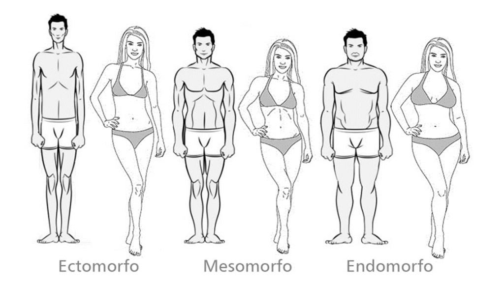 Tipos de corpos. Dieta para cada tipo de corpo