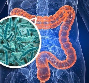 microbiota-intestinal-e-imunologia