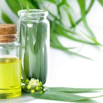 óleo essencial eucapito