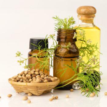 óleo essencial de coentro