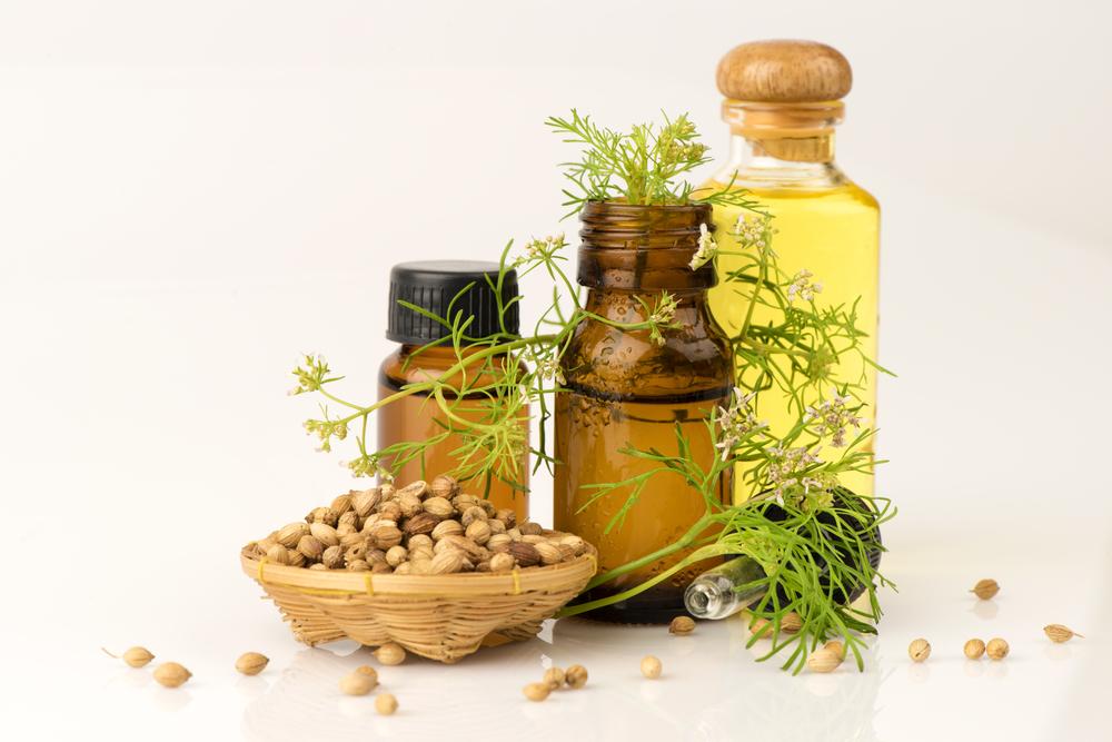 Óleo essencial de Coentro para aromaterapia - Dr. Juliano Pimentel